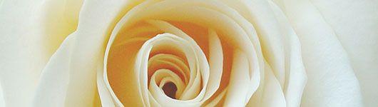 Wa_Rose