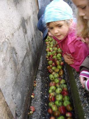 äpfel in der rinne
